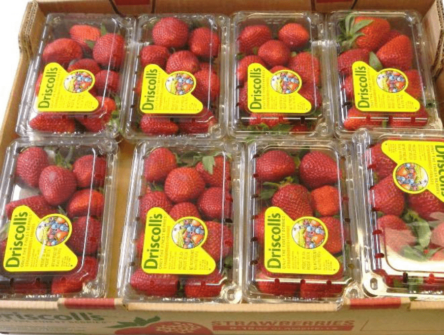 Close up of Driscoll's strawberries in containers pallet A
