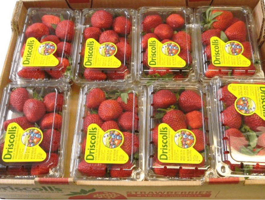 Close up of Driscoll's strawberries in containers pallet B