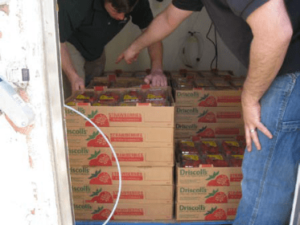 Boxes full of strawberries in food storage