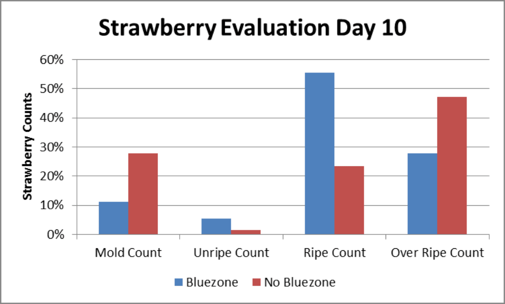Graph showing how long strawberries last with and without Bluezone UV air purification